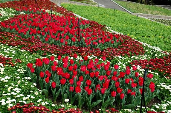 和歌山県植物公園緑花センター _b0093754_23523027.jpg