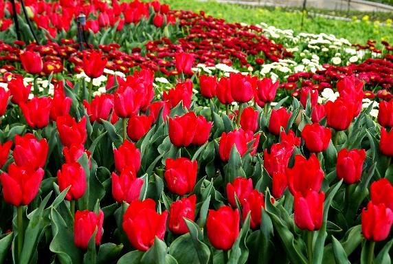 和歌山県植物公園緑花センター _b0093754_23523876.jpg