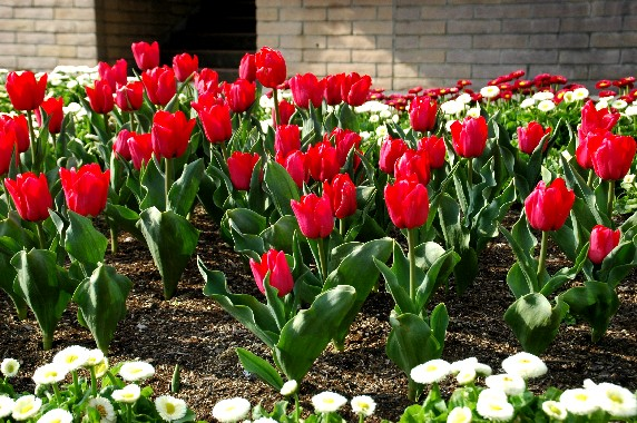 和歌山県植物公園緑花センター _b0093754_23524939.jpg