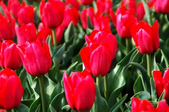 和歌山県植物公園緑花センター _b0093754_23525781.jpg