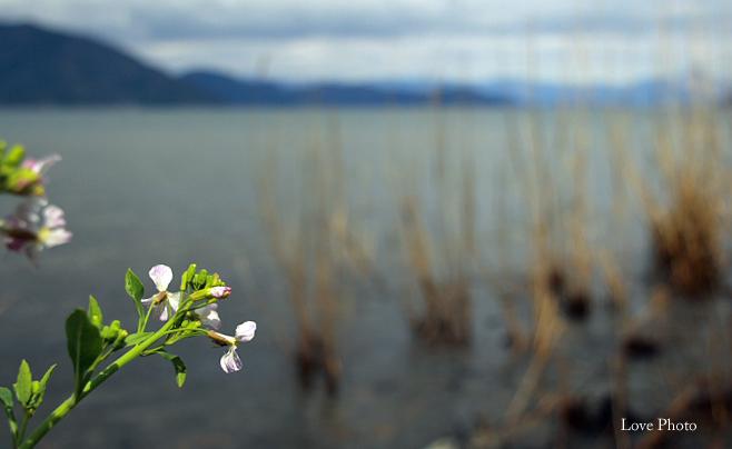 桜を求めて琵琶湖一周ドライブ ⑤_a0116472_14413248.jpg