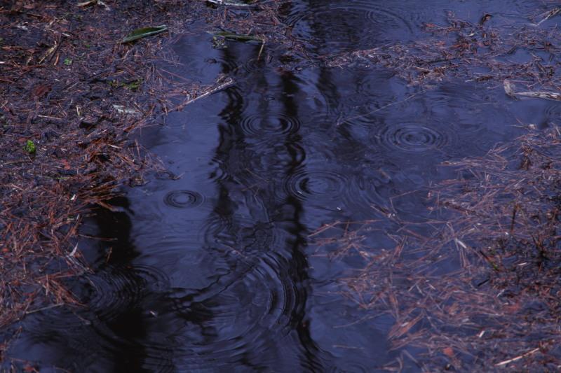 雨上がりの貞任高原_f0075075_4231258.jpg