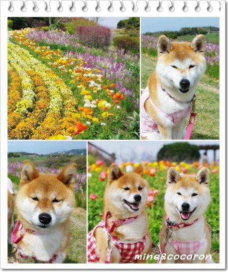 菜の花_a0053987_23365818.jpg