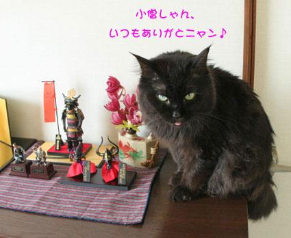 猫返し神社_d0071596_11574546.jpg