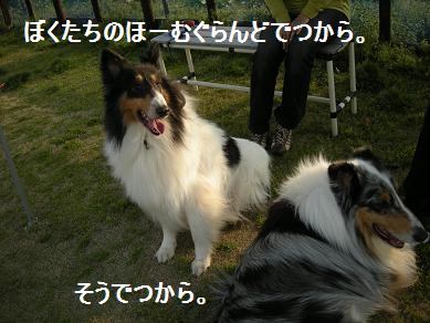 f0081100_20443540.jpg