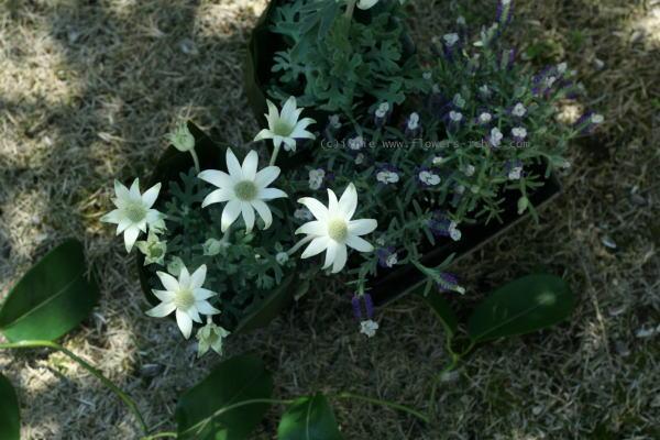 5月 ガーデンウエディング アスタナガーデン様へ_a0042928_2033154.jpg
