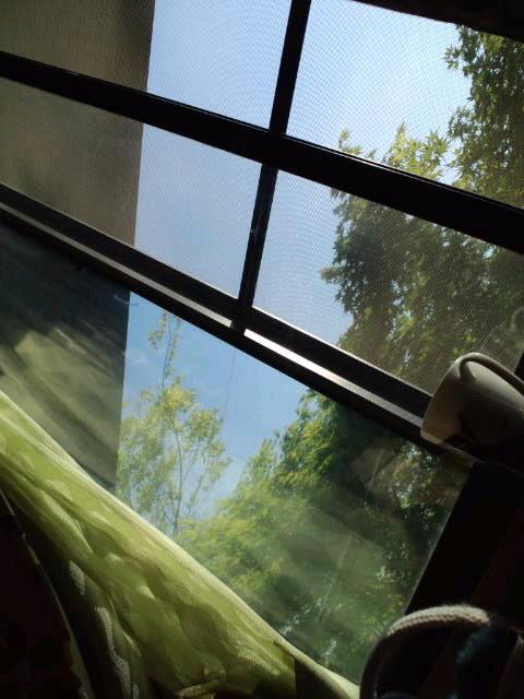 天気いいなぁ〜_c0151965_16191266.jpg