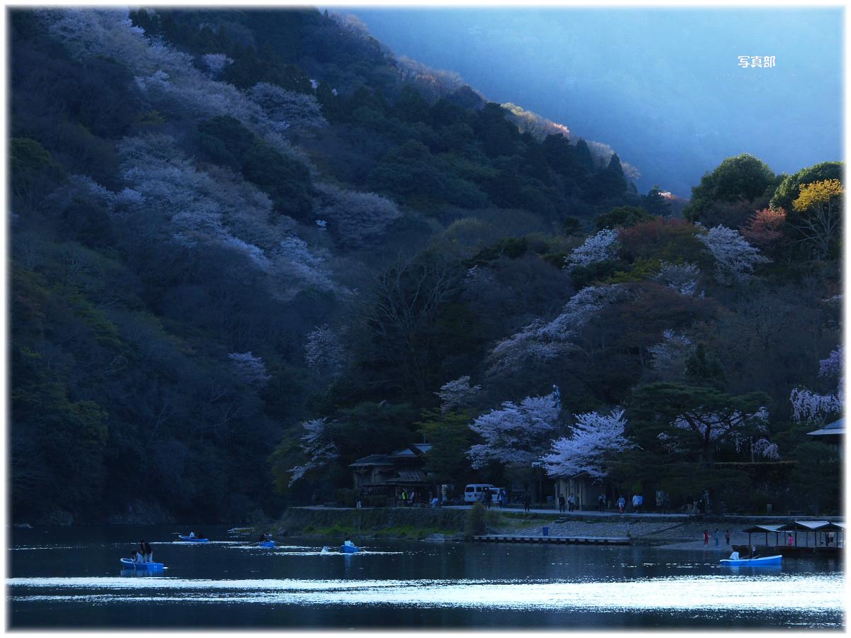 京都 嵐山 桜_f0021869_2240241.jpg