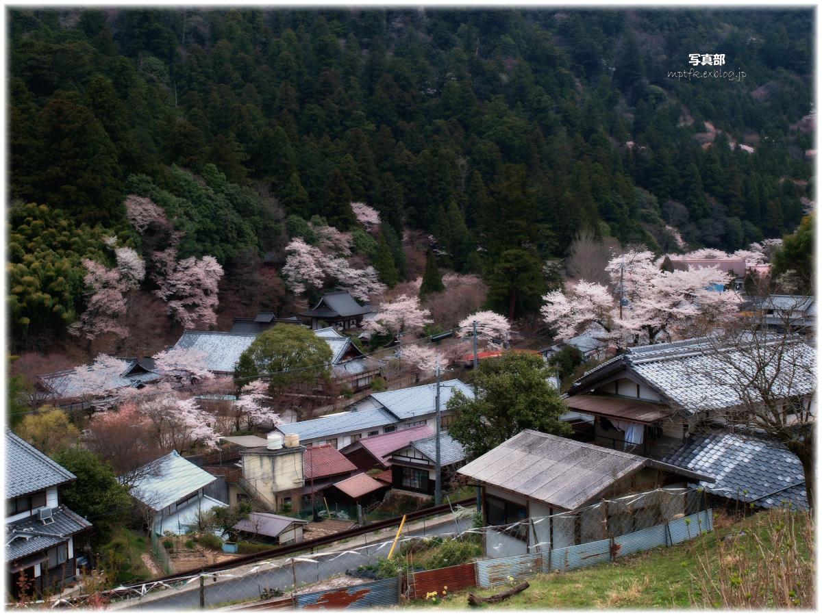 奈良 室生の里 桜_f0021869_22483057.jpg
