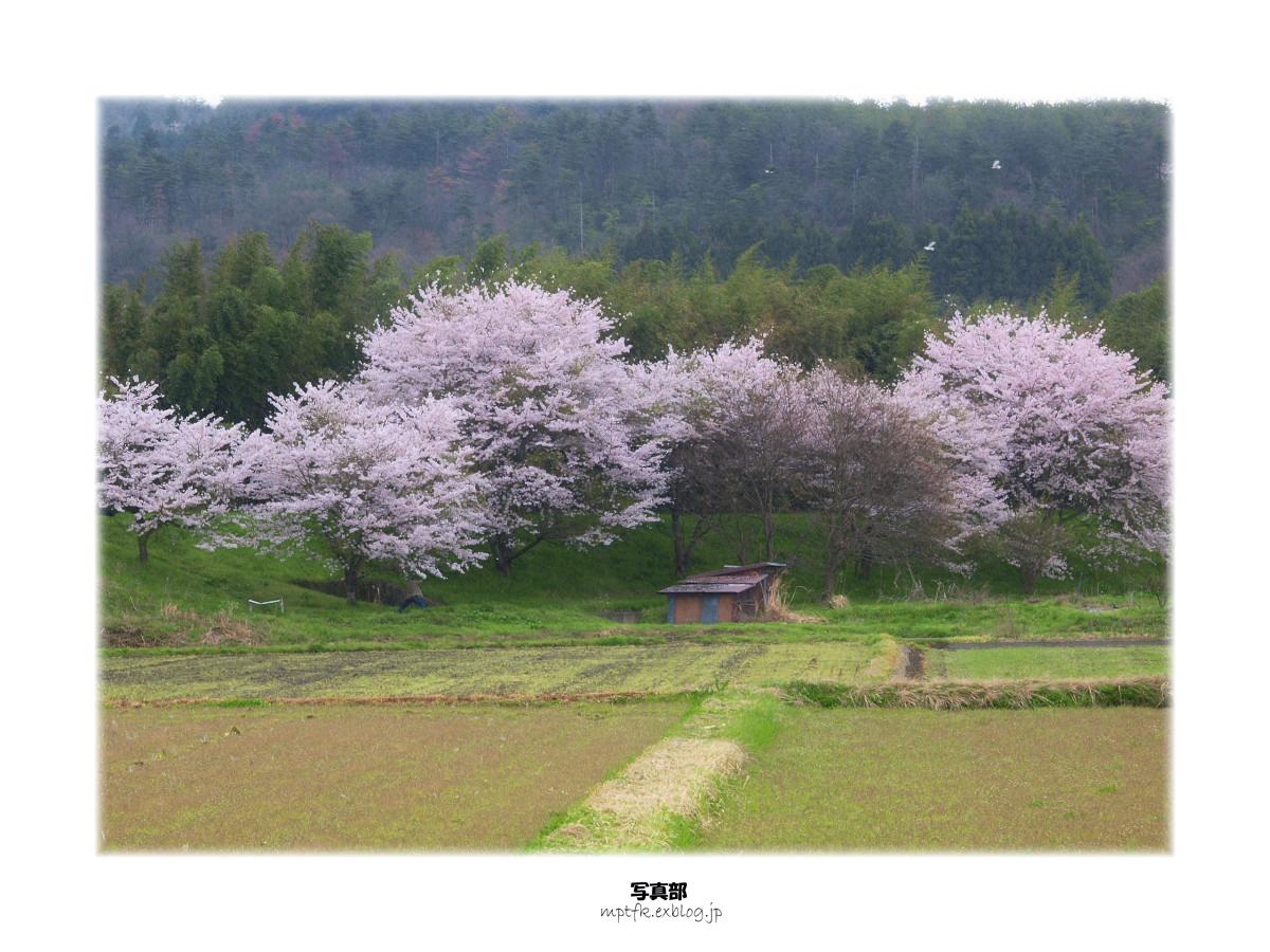春の琵琶湖を一周ブログ旅 安曇川_f0021869_5194965.jpg