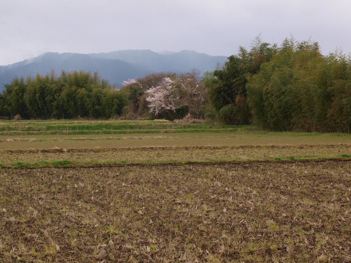 春の琵琶湖を一周ブログ旅 安曇川_f0021869_5203023.jpg