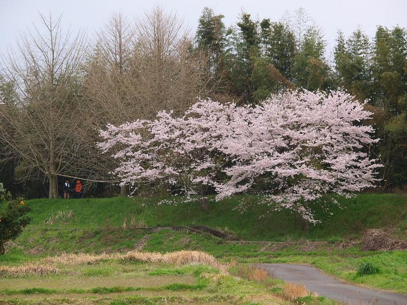 春の琵琶湖を一周ブログ旅 安曇川_f0021869_5274881.jpg