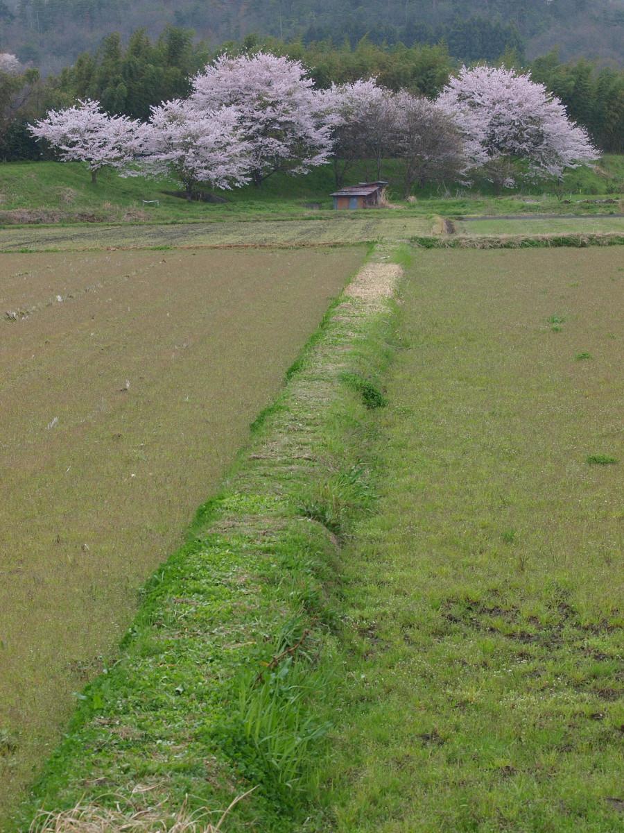 春の琵琶湖を一周ブログ旅 安曇川_f0021869_5304735.jpg