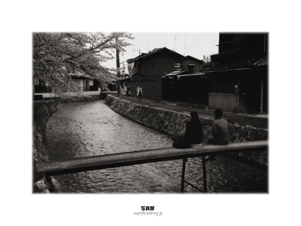 京都 白川 桜_f0021869_7453588.jpg