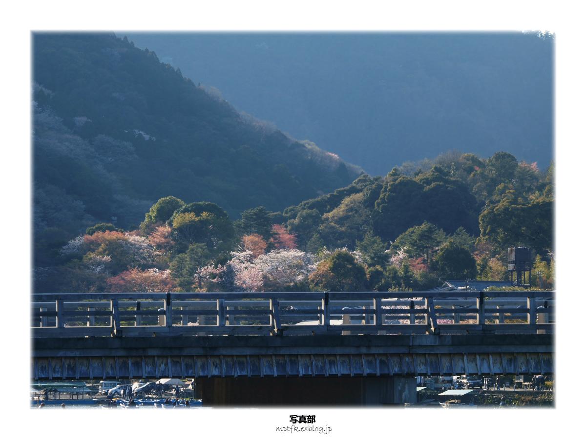 京都 嵐山 桜_f0021869_8334349.jpg