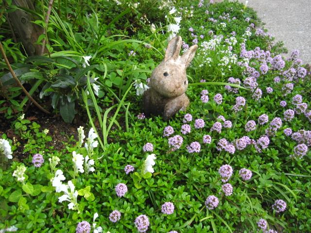 花の中のウサギ_e0181373_2028883.jpg