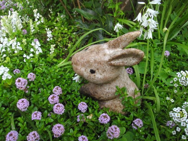 花の中のウサギ_e0181373_20302039.jpg