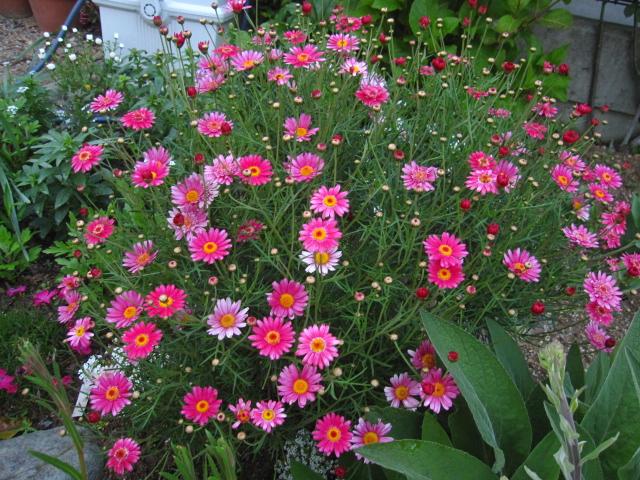 花の中のウサギ_e0181373_20353392.jpg