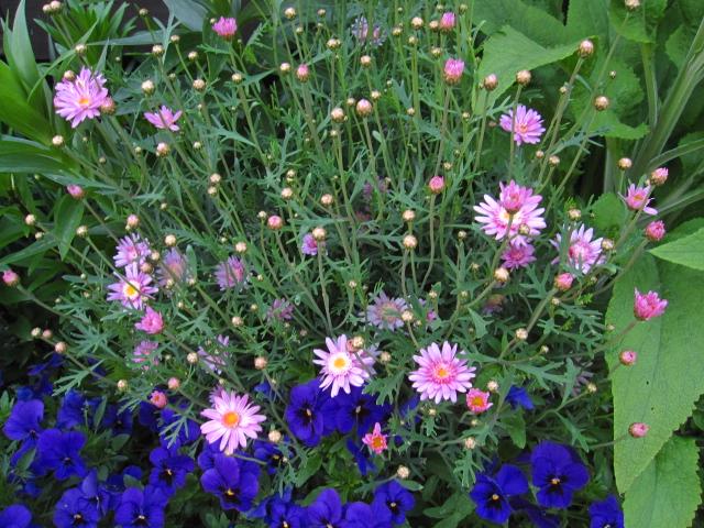 花の中のウサギ_e0181373_2035784.jpg