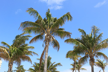 マイアミのビーチの風をおすそわけ!_c0050387_14164819.jpg