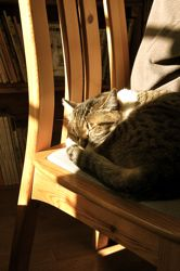カッパと猫。_d0028589_002018.jpg