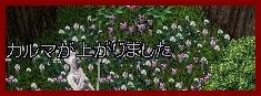 b0096491_6243035.jpg