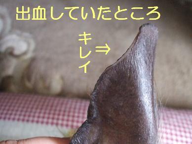 f0179203_6461815.jpg