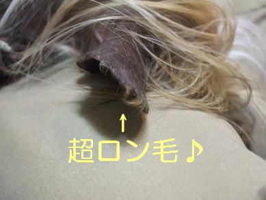 f0179203_6463880.jpg
