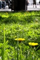 夏日のNYでは公園がお勧めです バッテリーパークより_b0007805_225395.jpg
