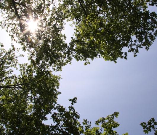 夏日のNYでは公園がお勧めです バッテリーパークより_b0007805_2254018.jpg