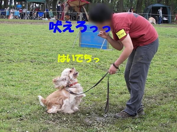 b0067012_22403015.jpg