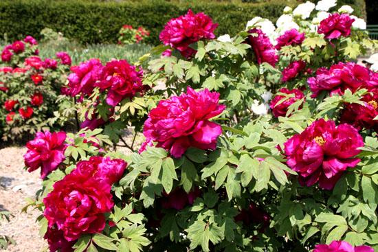 植物園1 花づくし_e0048413_20272396.jpg