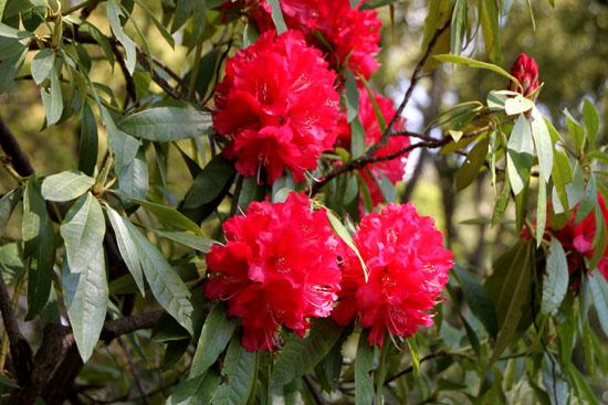 植物園1 花づくし_e0048413_20273912.jpg