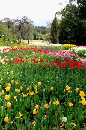 植物園1 花づくし_e0048413_20275574.jpg
