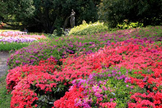 植物園1 花づくし_e0048413_20281476.jpg