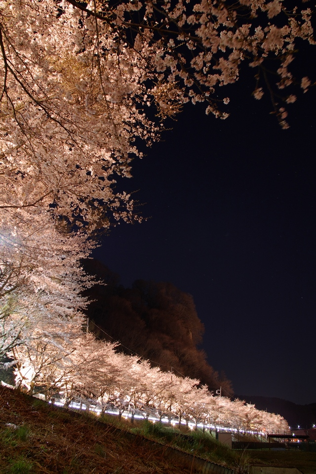 万座経由でおりて行くと・・・桜並木_a0060230_2236815.jpg