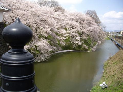 お花見~♪_f0113630_7213028.jpg