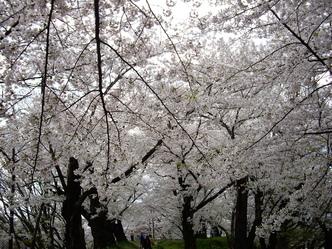 お花見~♪_f0113630_7224834.jpg