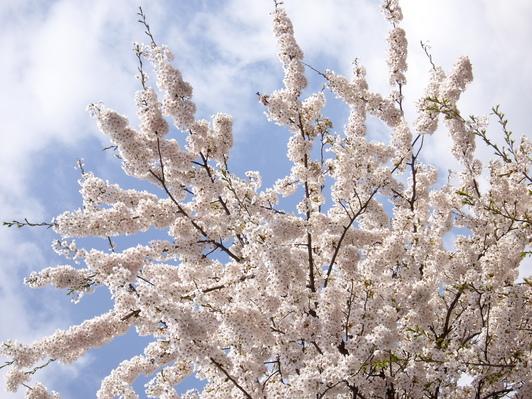 お花見~♪_f0113630_752789.jpg