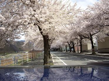 お花見~♪_f0113630_75922.jpg