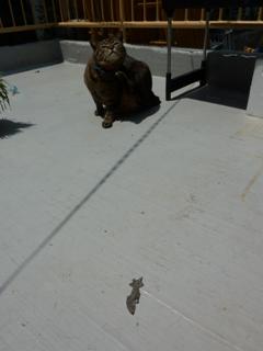 猫のお友だち 珊瑚ちゃん祿太くん 犬のお友だち イチローくん編。_a0143140_17563455.jpg