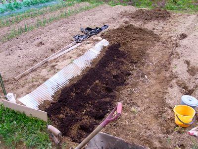 \'10年 自然薯波板栽培 2_c0063348_812122.jpg