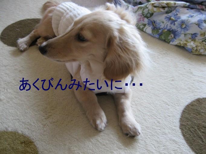 b0160052_20435632.jpg