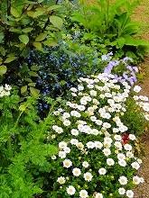 裏庭の花_f0207652_11292739.jpg