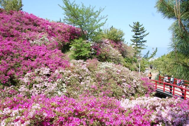 第2回つつじ祭り in  岬町淡輪「あたご山」_c0108460_15394490.jpg