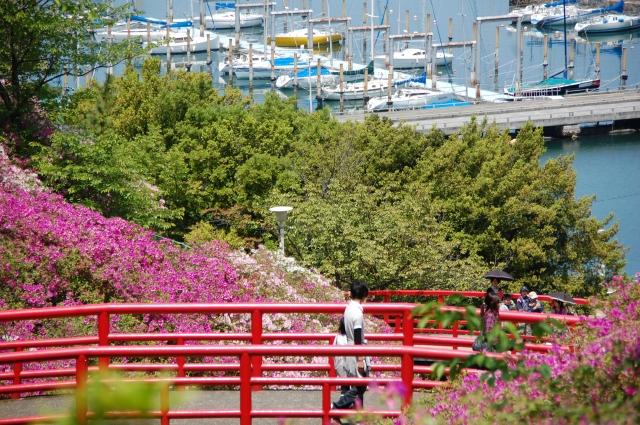 第2回つつじ祭り in  岬町淡輪「あたご山」_c0108460_1540577.jpg
