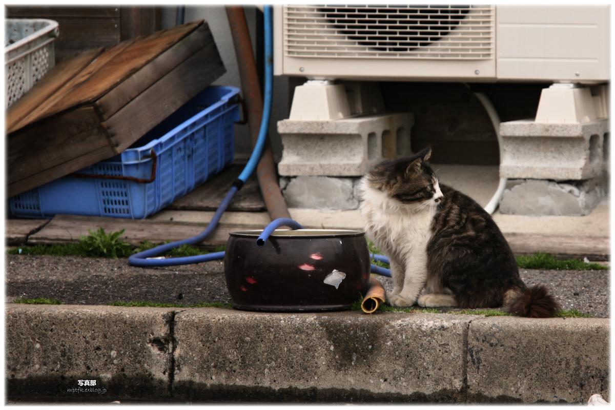 猫にゃん_f0021869_9233577.jpg