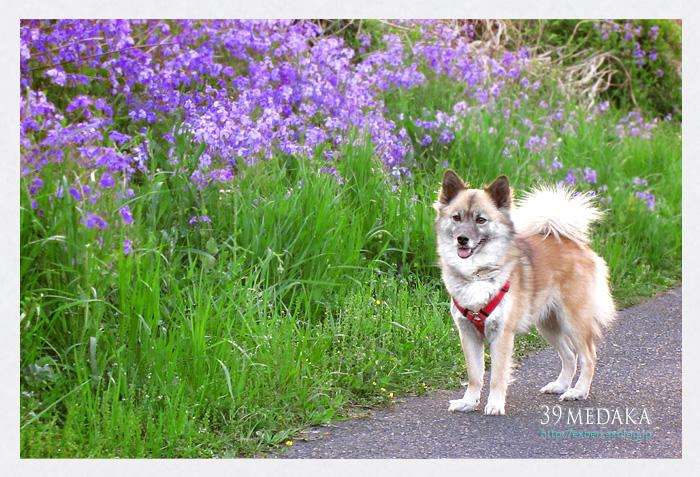 お散歩日記_c0210599_1938180.jpg