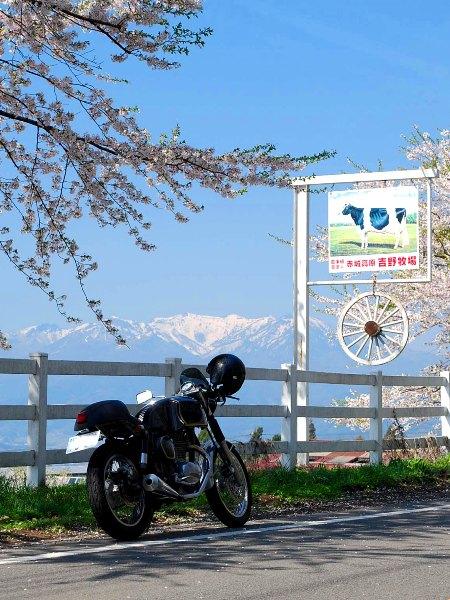 バイクで桜を追いかけて・・・_c0177814_23533234.jpg