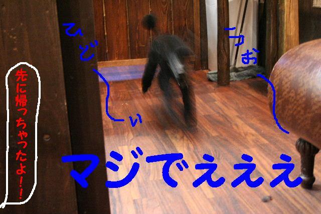 b0130018_17254595.jpg